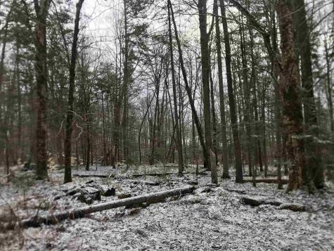 Old County Road Waterford VT 05819