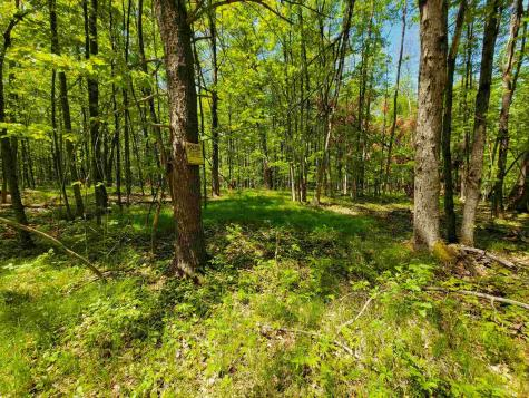 41 Daigneault Hill Road Orwell VT 05760