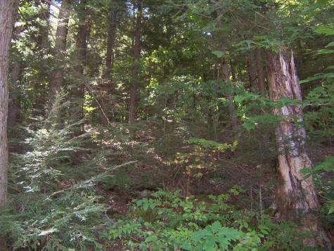 Nicholson Drive Woodstock NH 03293
