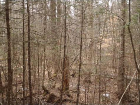 Lot 8 Walker Hill Road Lisbon NH 03585