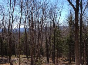 Lot #2 Woodsman Road Dover VT 05356