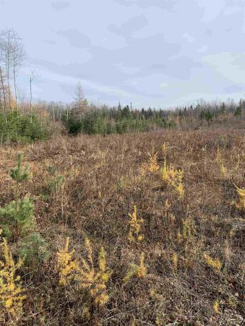 Lot 3 Longwood Drive Whitefield NH 03598
