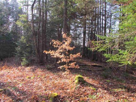 Moretown Mountain Moretown VT 05660