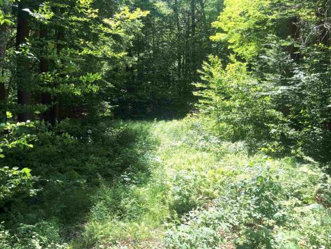 80 Cody Road Landgrove VT 05148