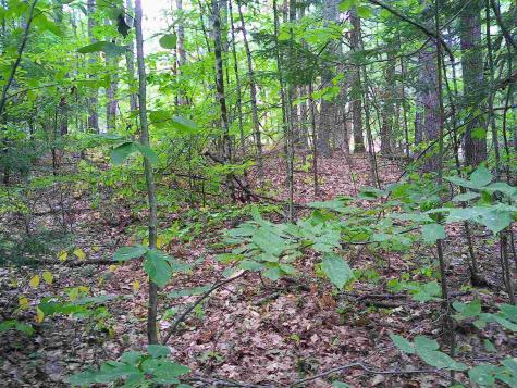 Lot 82 Red Oak Road Barnstead NH 03225