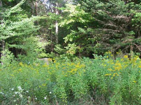 Lot 2 Cortina Country Road Mendon VT 05701