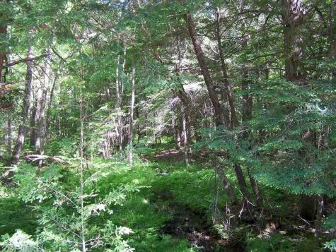 Lot 48 Dean and Hoyt Brook Danbury NH 03230