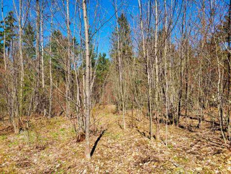 3619 Four Mile Wood Road Roxbury VT 05669