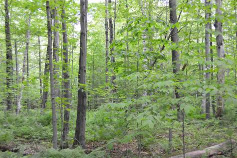 Lot 1 Durgin Road Tuftonboro NH 03816