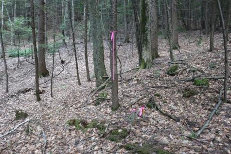 Manning Hill Road Winchester NH 03470