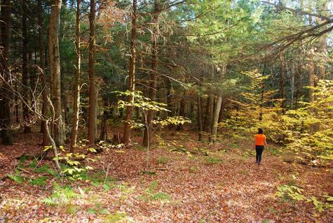 Lot N Ring Montgomery VT 05471