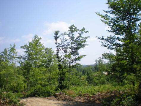 Lot 22 Deer Path Lane Tuftonboro NH 03816