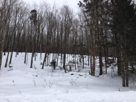 Lot 42-43 Daniel Beard Road Pittsburg NH 03592
