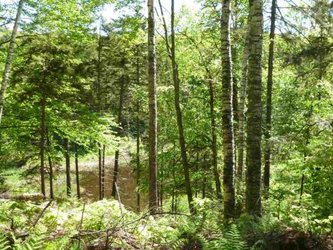 Two Ponds Road Warren VT 05674