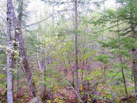 - Wheeler Mountain Road Barton VT 05822