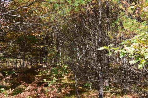 4 Sagamore Ridge Tuftonboro NH 03816