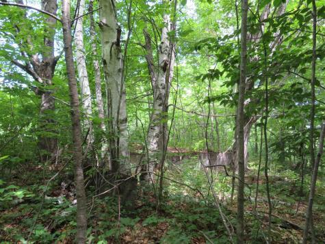 1787 Howe Hill Road Sharon VT 05065