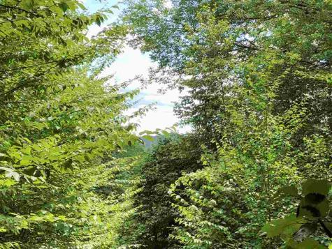 Butternut Hill Waitsfield VT 05673-0000