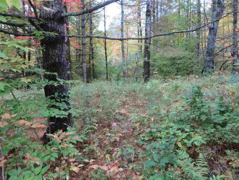 Lot #B-6 Chamberlain Lane Waterford VT 05819