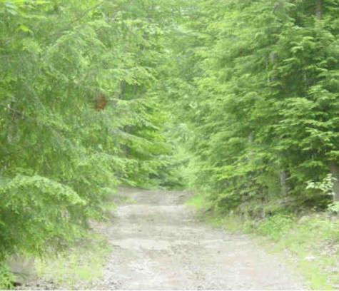 Forest Avenue Swanzey NH 03446